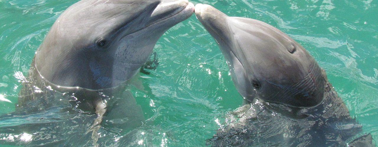 Best Gifts For Dolphin Lovers Ideas 092df83b958f
