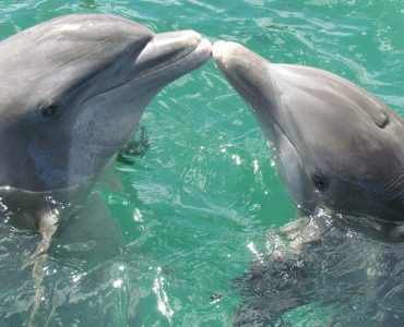 Best Gifts For Dolphin Lovers Ideas