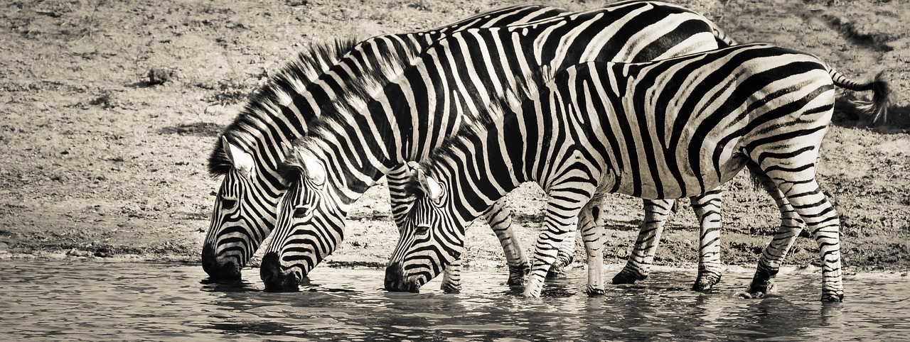 Best Gifts For Zebra Lovers Ideas