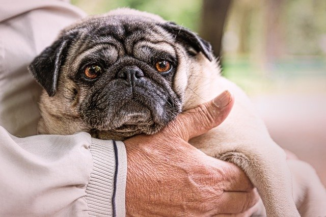 Gifts For Someone Who Loves Pugs
