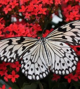 Butterfly Gifts For Her