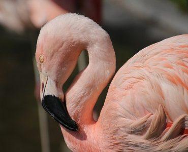 Pink Flamingo Gifts